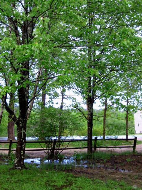 2013springtrees