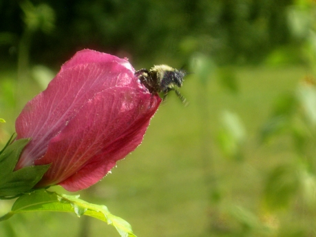 2013summerflowerbumble2