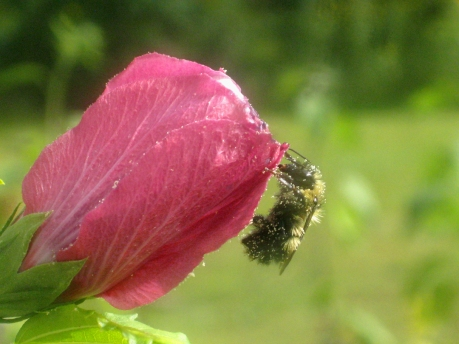 2013summerflowerbumble3