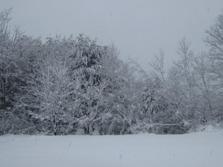 wintertreessnow