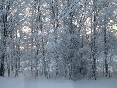 wintertreessnow2