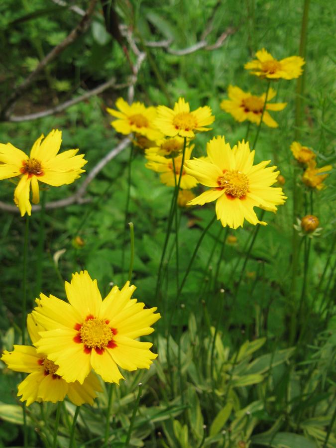 2014midsumflower11