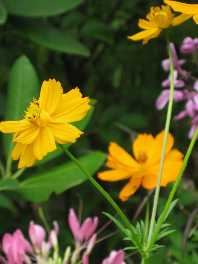 2014midsumflower17