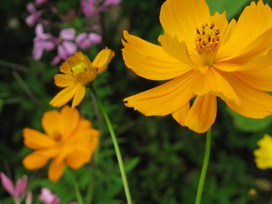 2014midsumflower18
