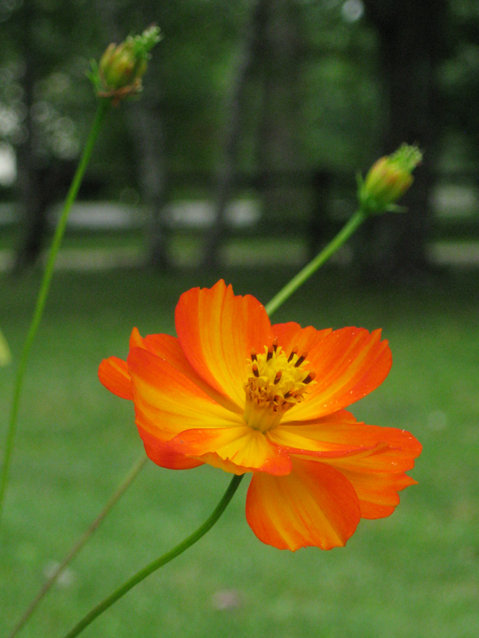2014midsumflower19