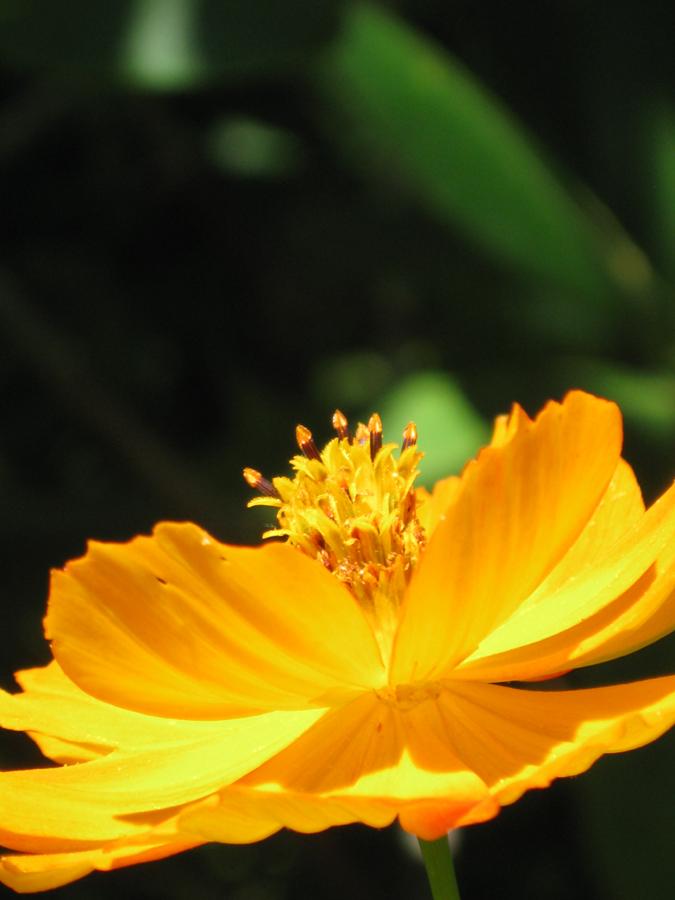 2014midsumflower23