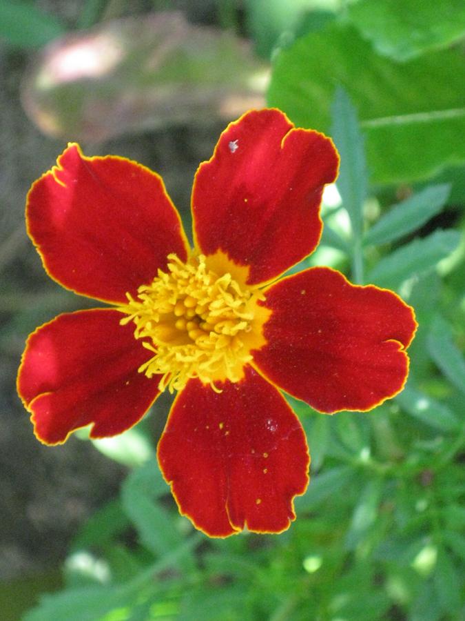 2014midsumflower25
