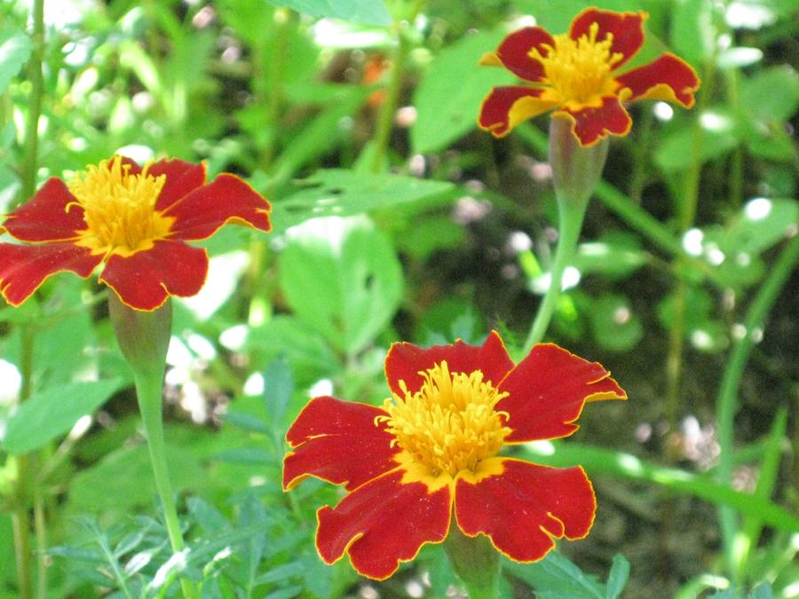 2014midsumflower26