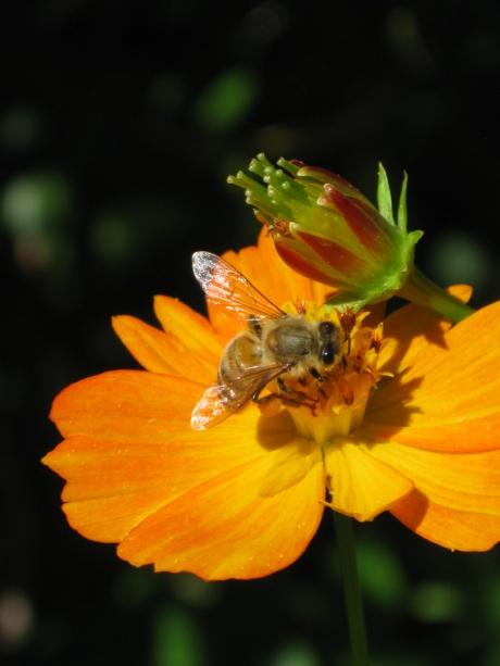 2014midsumflowerbee3