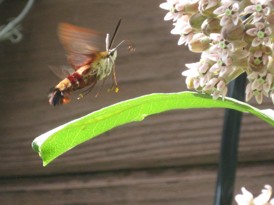 2014springbeebutterfly