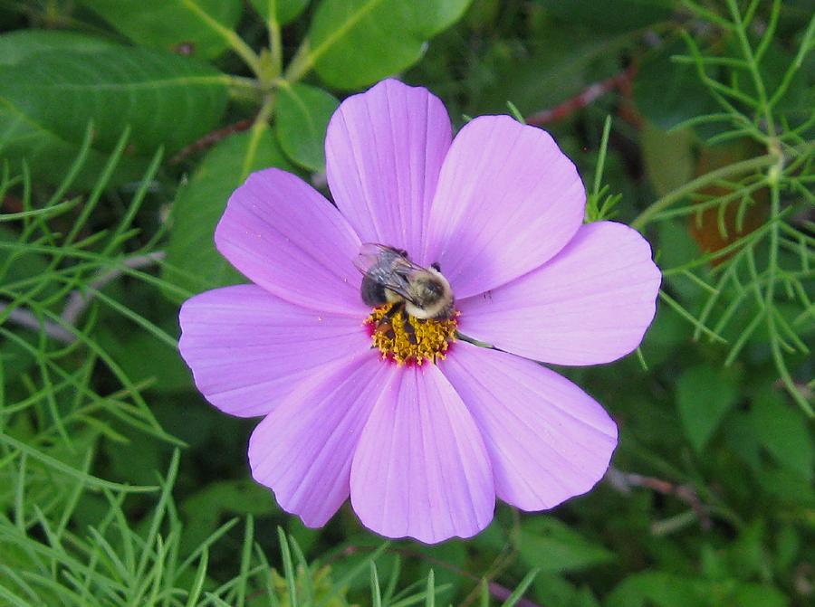 2014springbeepurpleflower