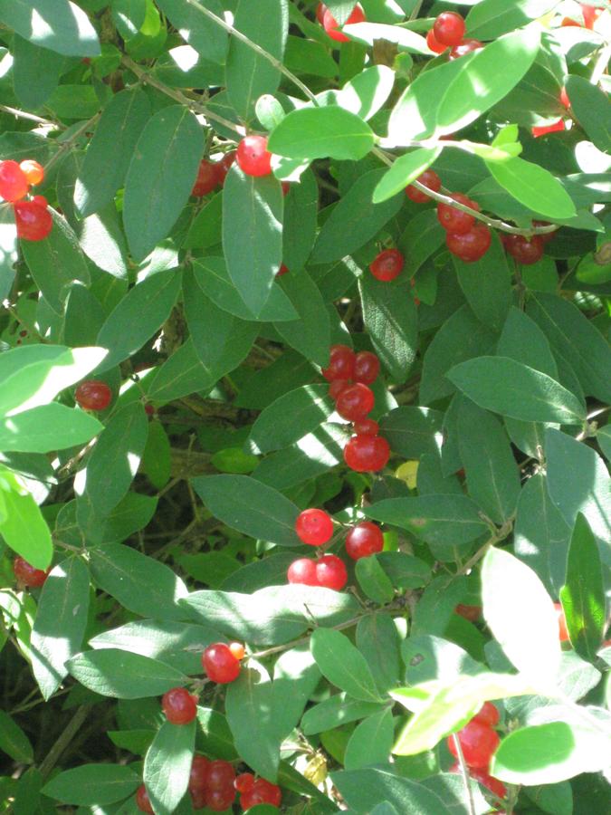 2014springberries