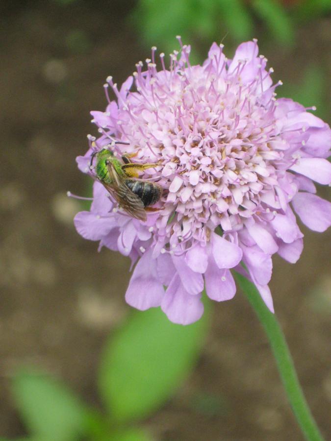 2014springflowerfly
