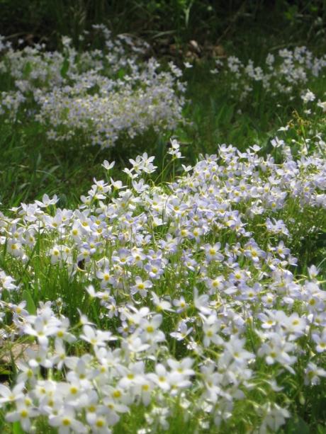 2014springflowers1