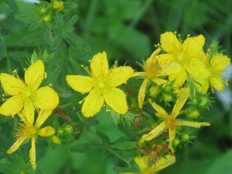 2014springflowers13