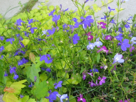 2014springflowers14