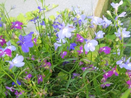 2014springflowers15