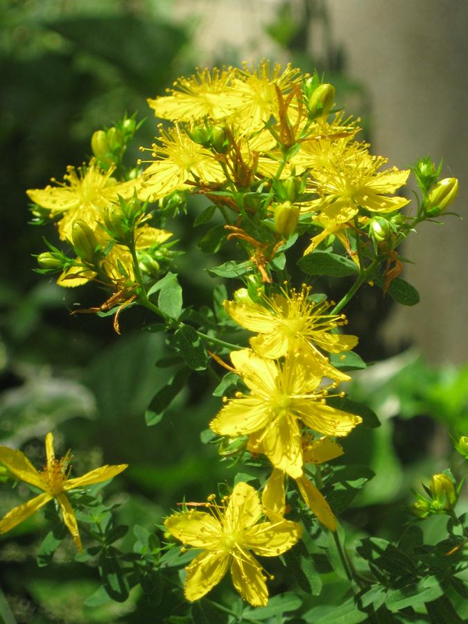 2014springflowers16