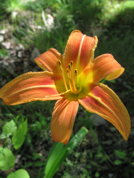 2014springflowers17