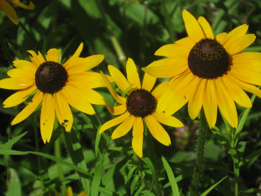2014springflowers18