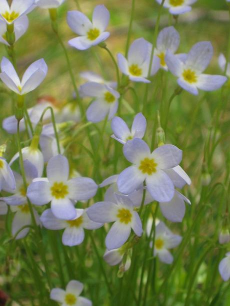2014springflowers2