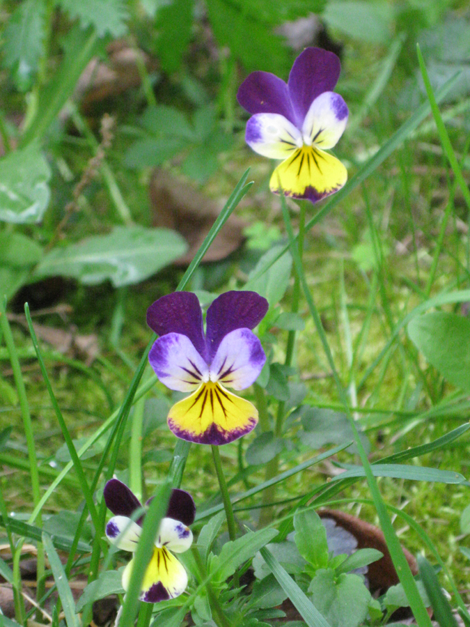 2014springflowers6