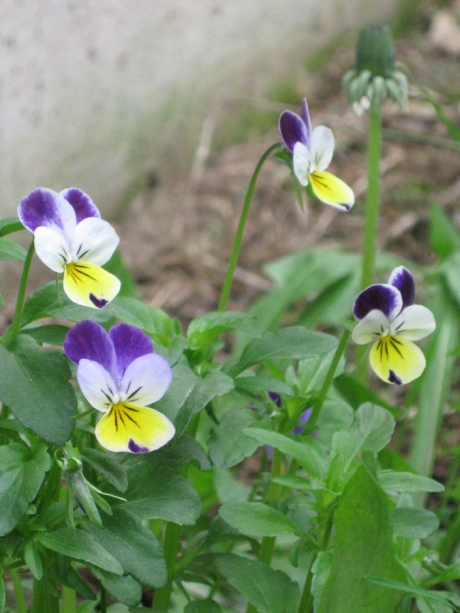2014springflowers7