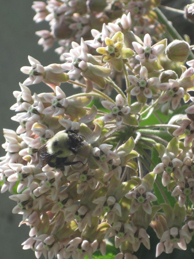 2014springflowersbee1