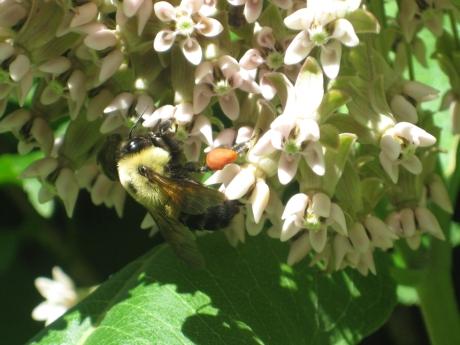 2014springflowersbee2