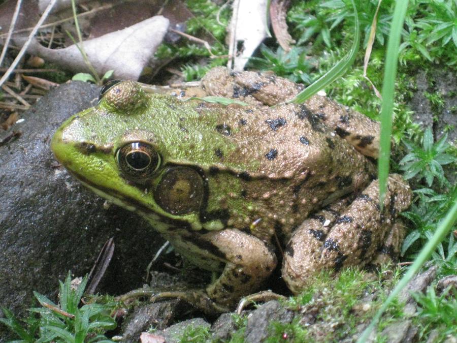 2014springfrog1