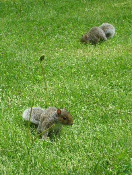 2014springsquirrels1