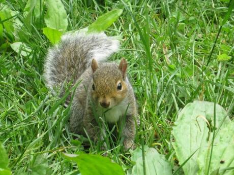 2014springsquirrels2