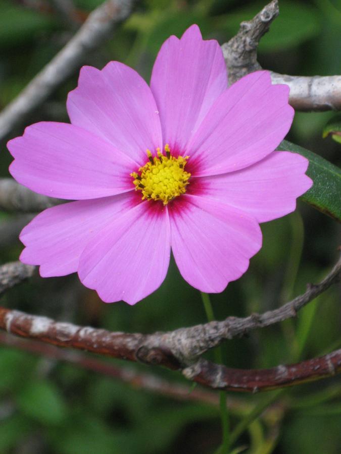 2014summerflower