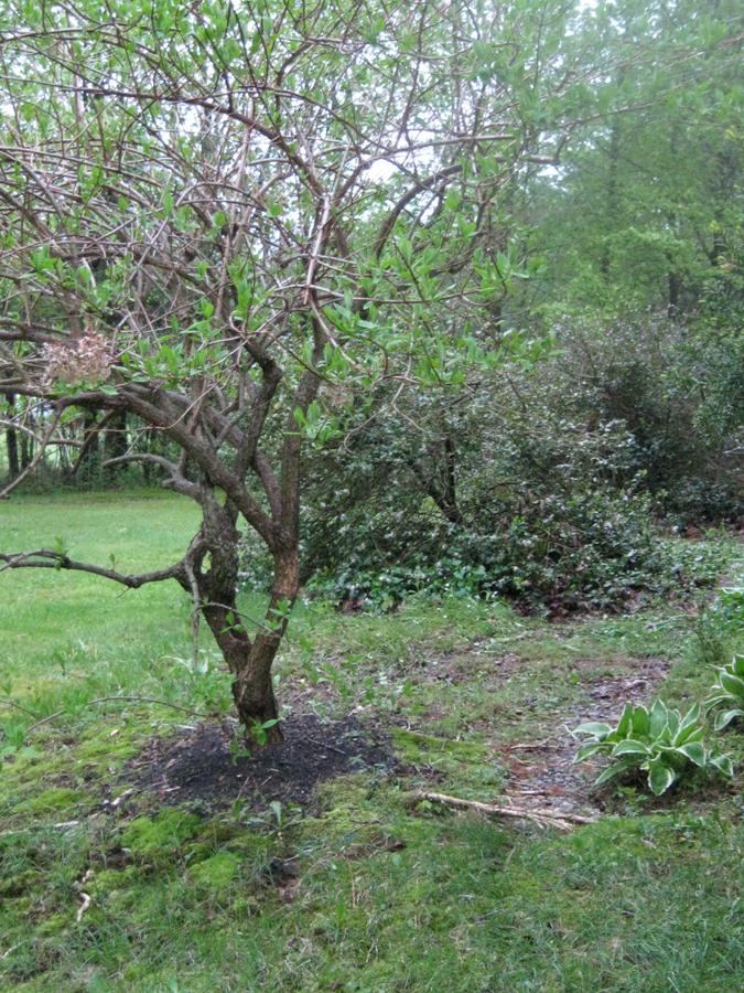 2014tree