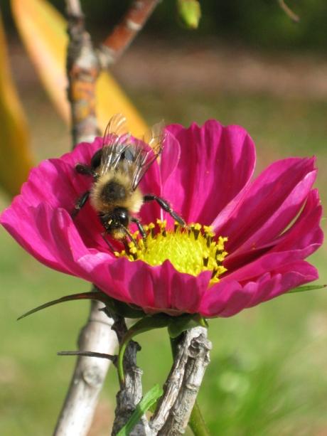 2014fallflowerbee1