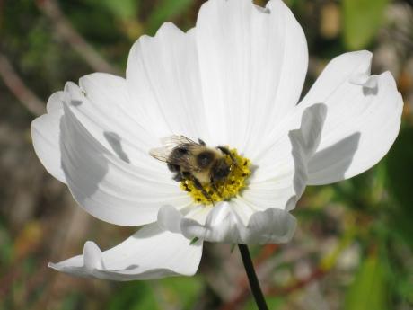 2014fallflowerbee2