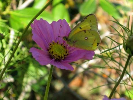 2014fallflowerbutterfly1