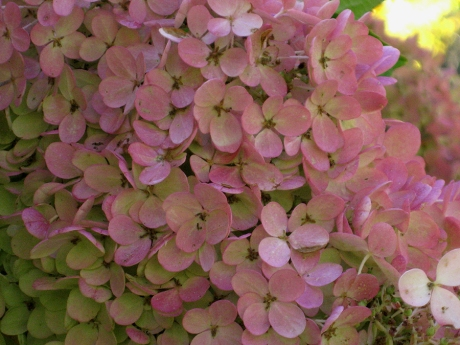 2014fallflowerhyd15