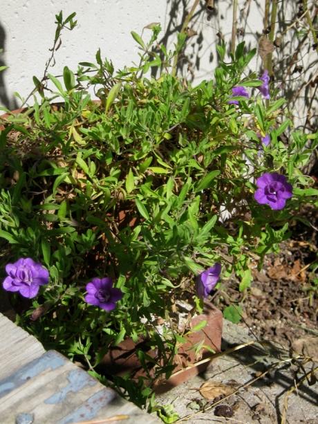 2014fallflowerpurple4