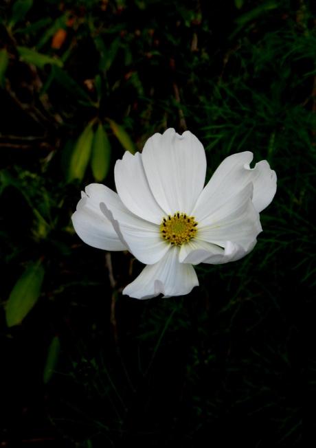 2014fallflowerwhite11