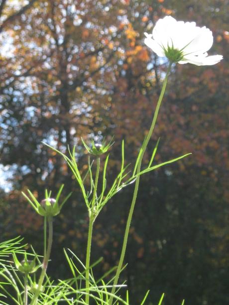 2014fallflowerwhite7