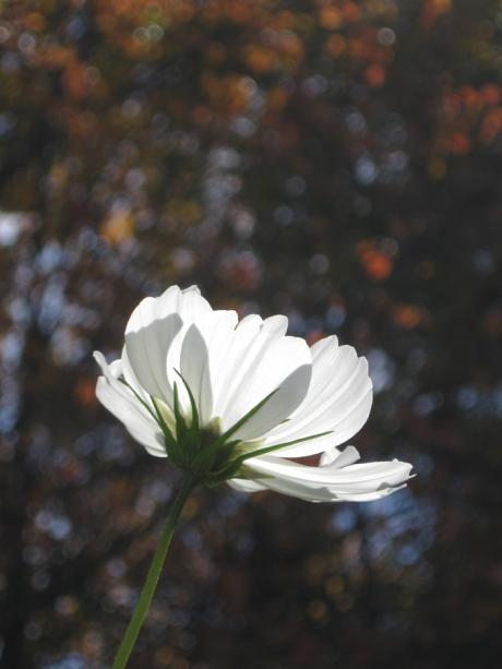 2014fallflowerwhite8