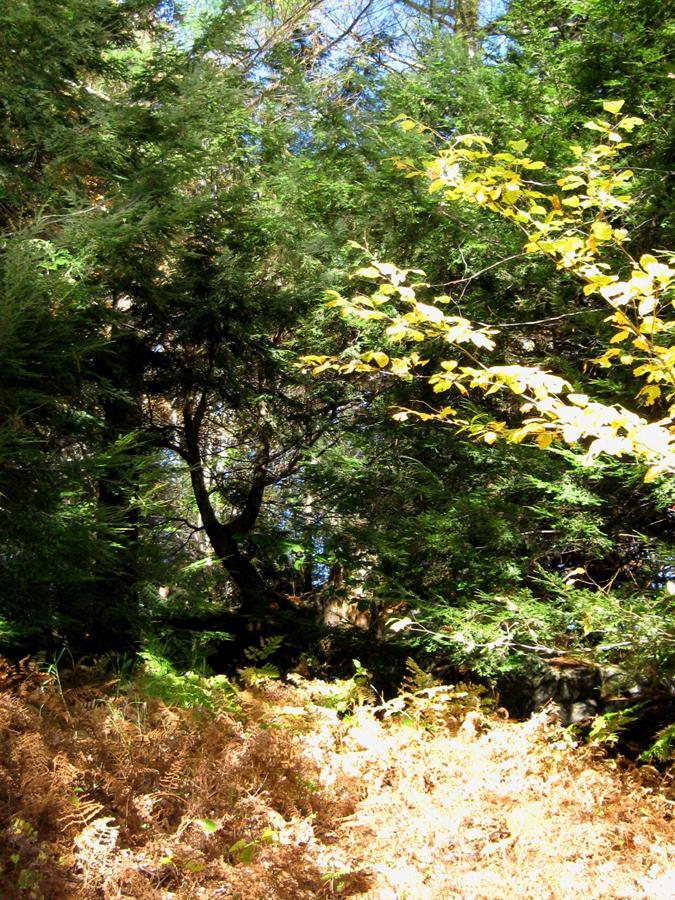 woodswalk12