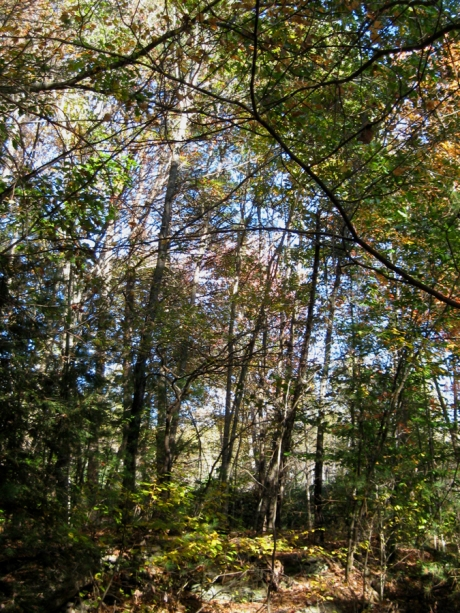 woodswalk15