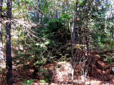 woodswalk16