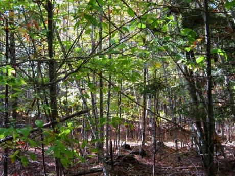 woodswalk17