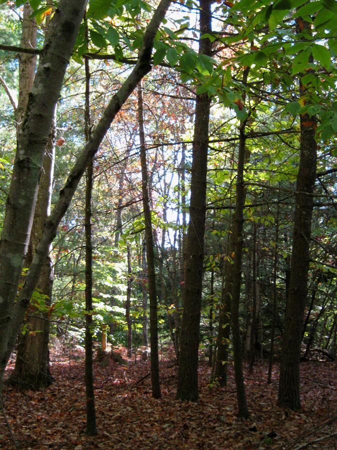 woodswalk18