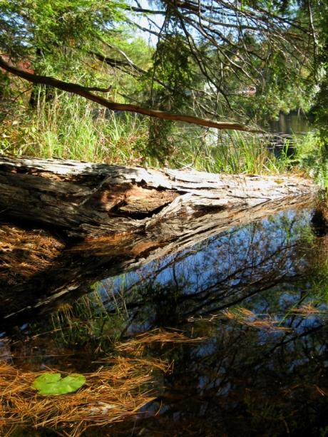 woodswalk2