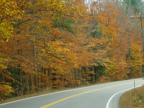 autumnroad1