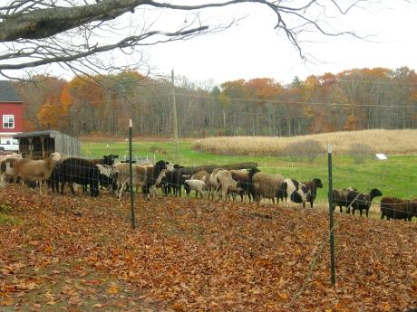 autumnroadfarm1